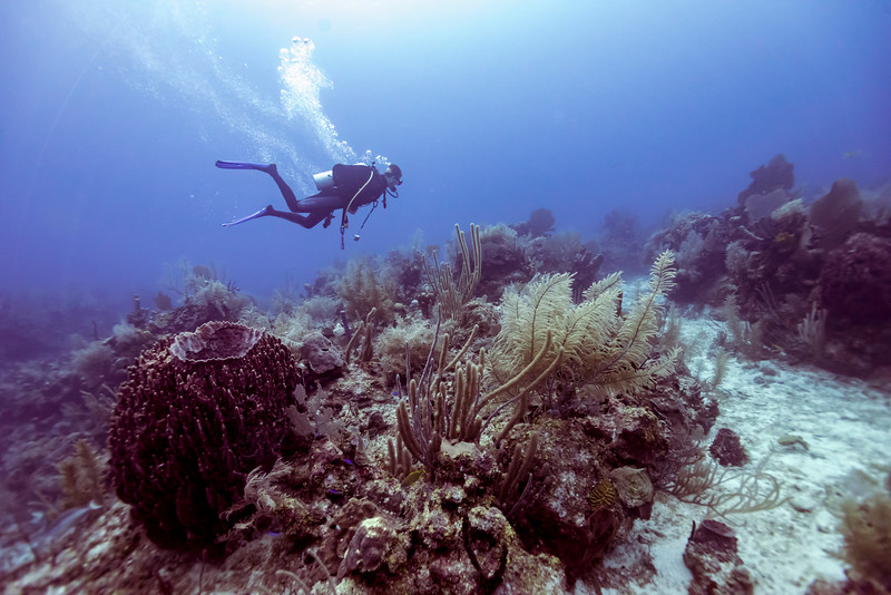 Scuba diver and coral reef underwater, Belize