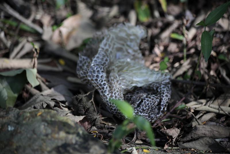 Snake skin, I believe