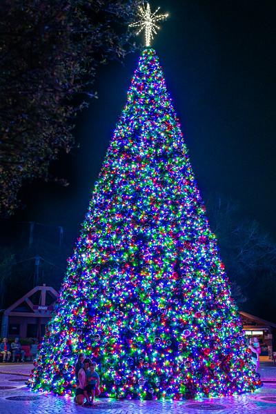 ZooTampa_Christmas-159.jpg