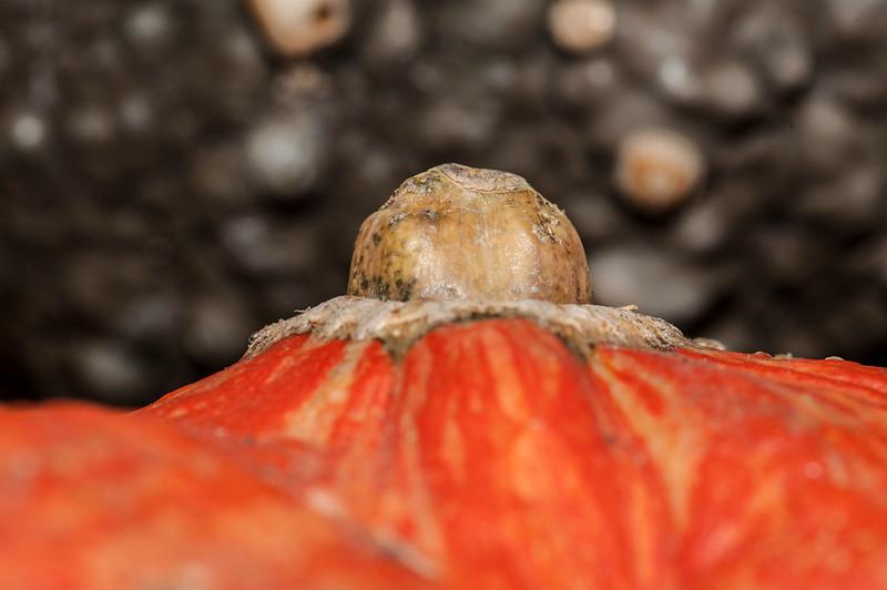 Pumpkins-18.jpg