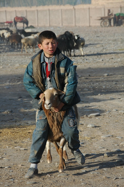 Uighur Boy and Sheep - Kashgar, China