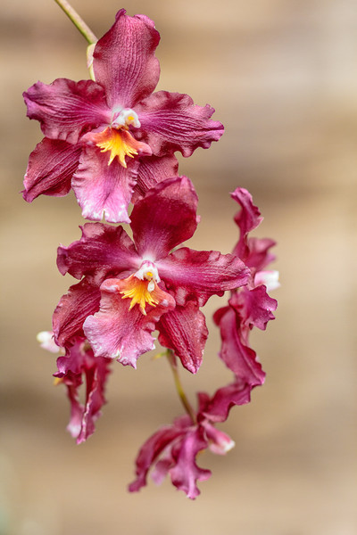 OrchidMania-70-Edit.jpg