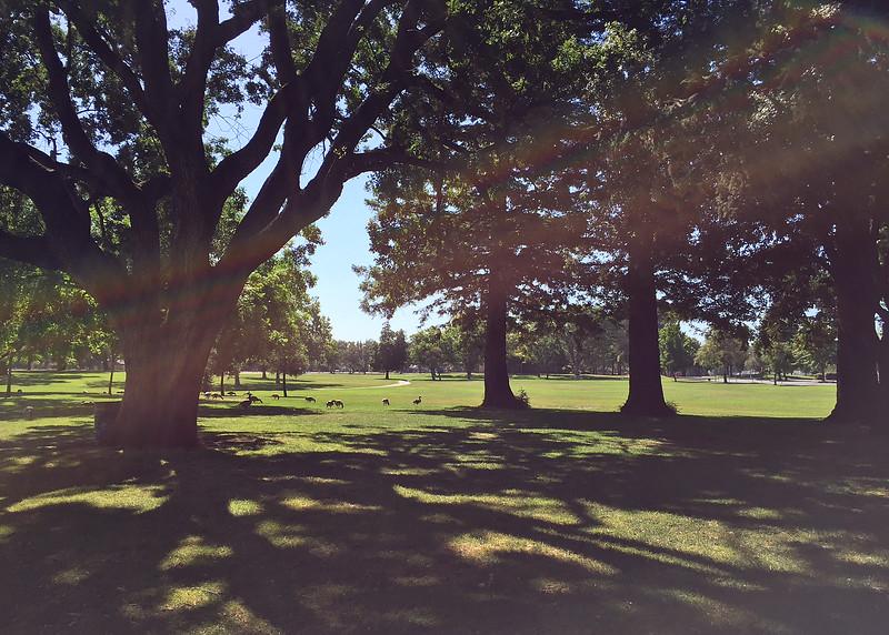 dreamy park.jpg