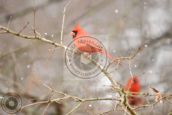 Snow Birds 2018