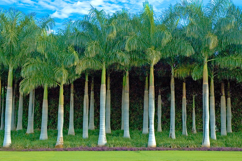 Papagayo Palms 9X6.jpg