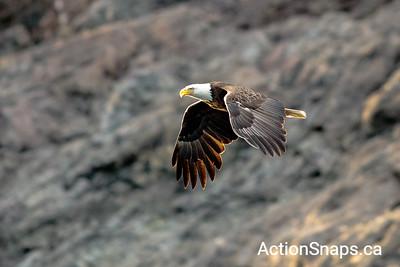 2018-06 Eagles from Zodiac - All photos