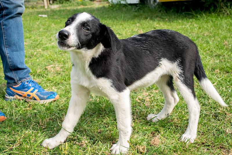 Pup #3