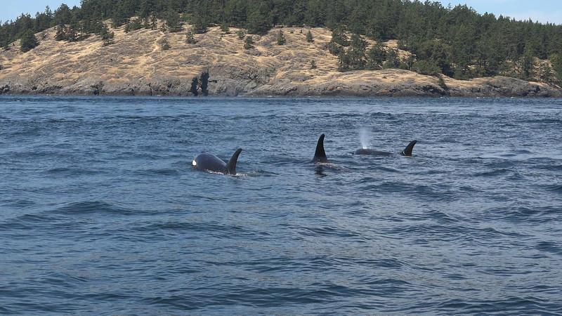 Three Whales.jpg