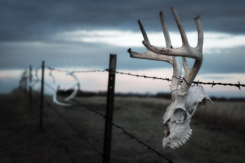 Nature & Wildlife