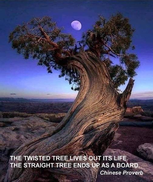 The Twisted Tree.JPG
