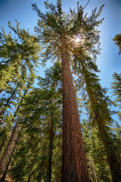 California Yosemite Sequioa on 2012-07-05 at 14-18-28.jpg