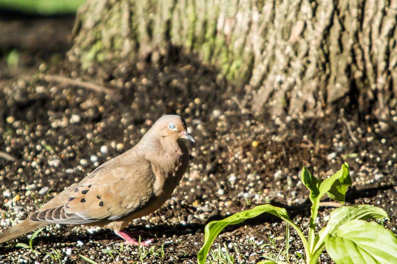 Birding_Rochester_061312_113.jpg