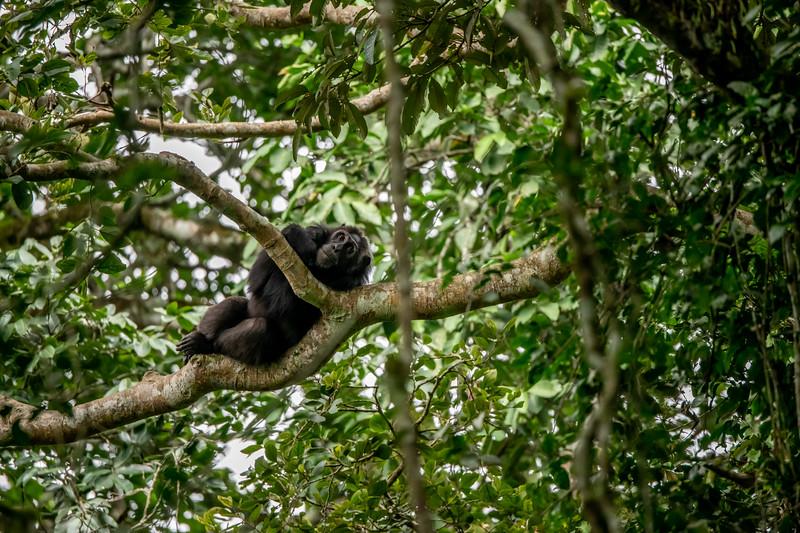 Uganda_T_Chimps-1034.jpg