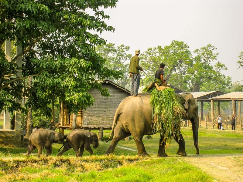 chitwan-national-park-15.jpg