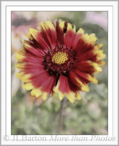 Field Flower Found in Lower Austria