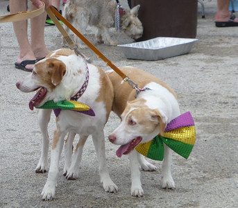 Barkus and Meoux Parade 2014