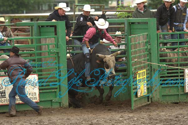 2013 Tillamook Bulls and Barrels
