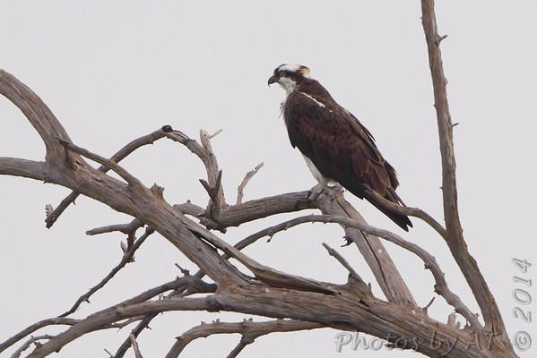 Birding 2014 October