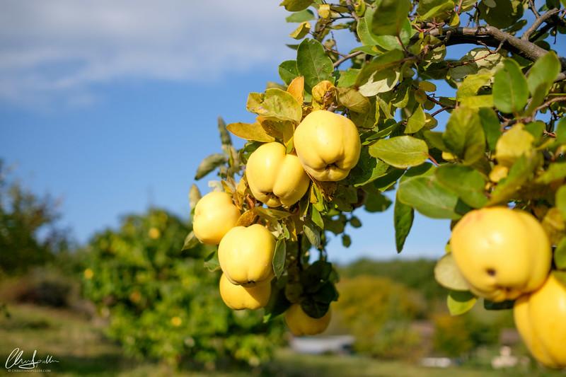 Früchte