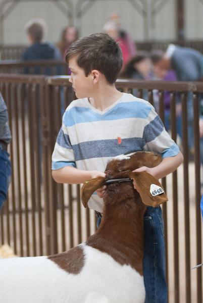 kay_county_showdown_goats_20191207-68.jpg