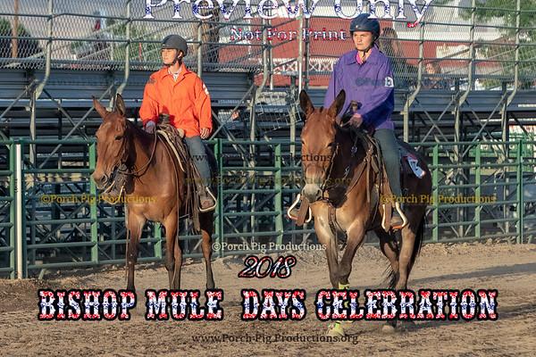 Mule Races