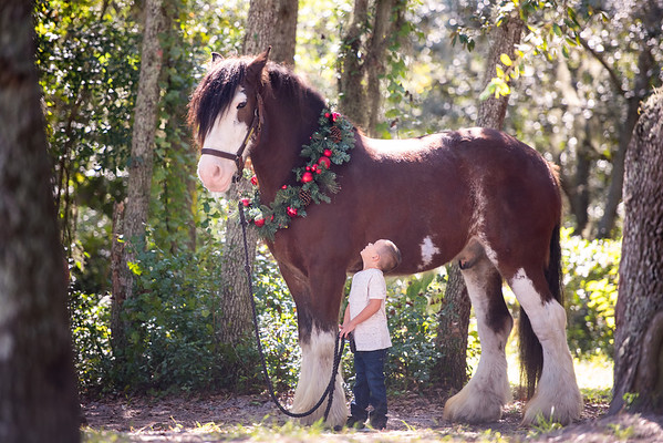 Clydesdales Oct 2018 - Cooke
