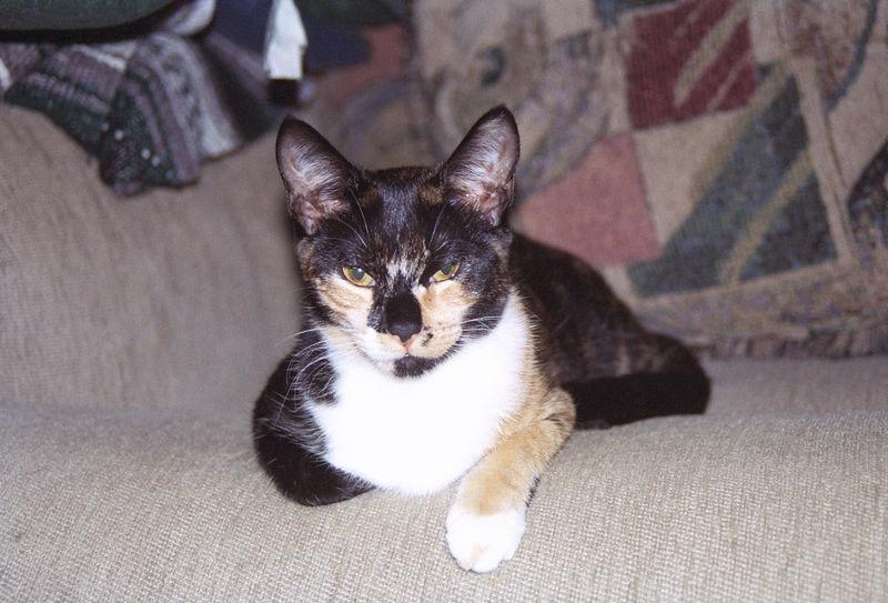2003 12 - Cats 40.jpg