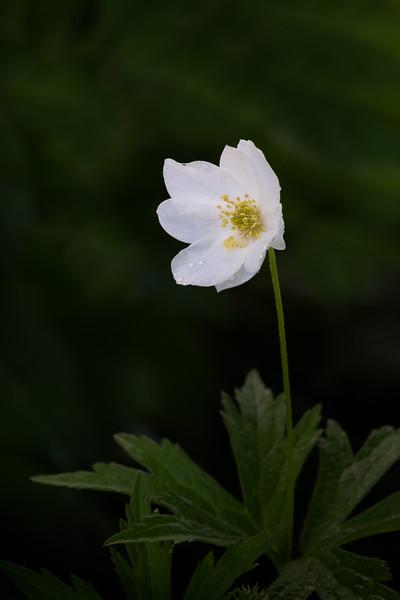 Flowers053020-193-Edit.jpg