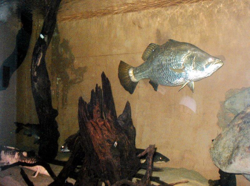 30. Sydney Aquarium.JPG