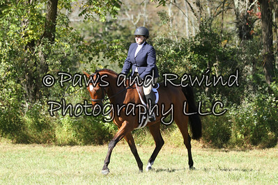 Low Hunter Under Saddle/Adult Equitation