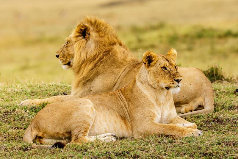 Kenya 2015-05383.jpg