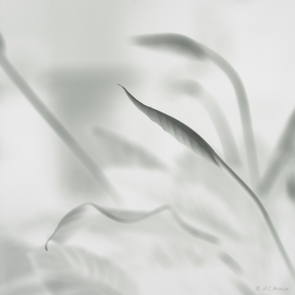 Peace Lily Project-The Negative