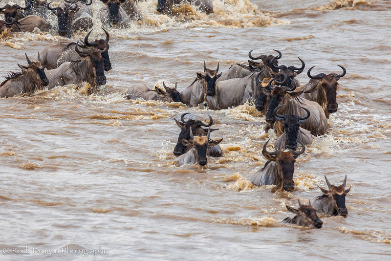 North_Serengeti-70.jpg