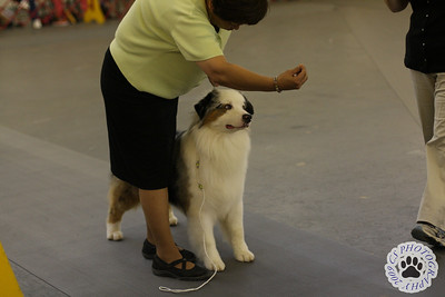 Virginia Kennel Club Dog Show-June 2009