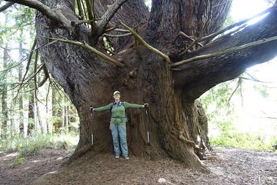 Candelabra Tree - 6/9/18