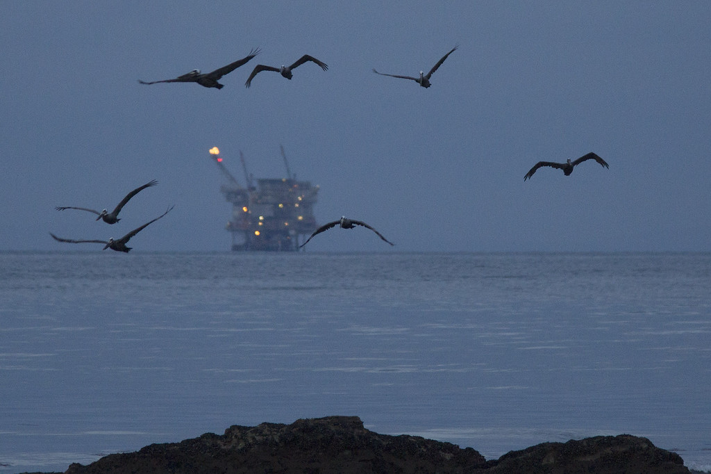. An oil platform sits in the distance as California brown pelicans fly over oil-contaminated water from an inland oil spill before dawn at Refugio State Beach on May 20, 2015 north of Goleta, California. About 21,000 gallons spilled from an abandoned pipeline on the land near Refugio State Beach, spreading over about four miles of beach within hours. The largest oil spill ever in U.S. waters at the time occurred in the same section of the coast where numerous offshore oil platforms can be seen, giving birth to the modern American environmental movement.  (Photo by David McNew/Getty Images)