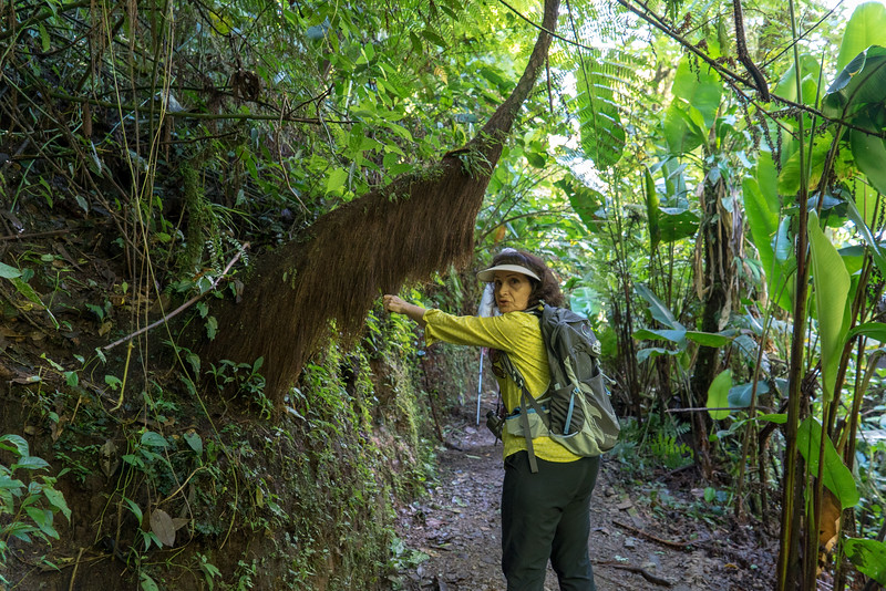 Costa Rica 2015-4129.jpg