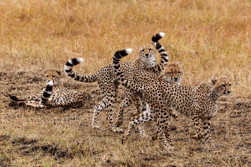 Kenya 2015-07754.jpg