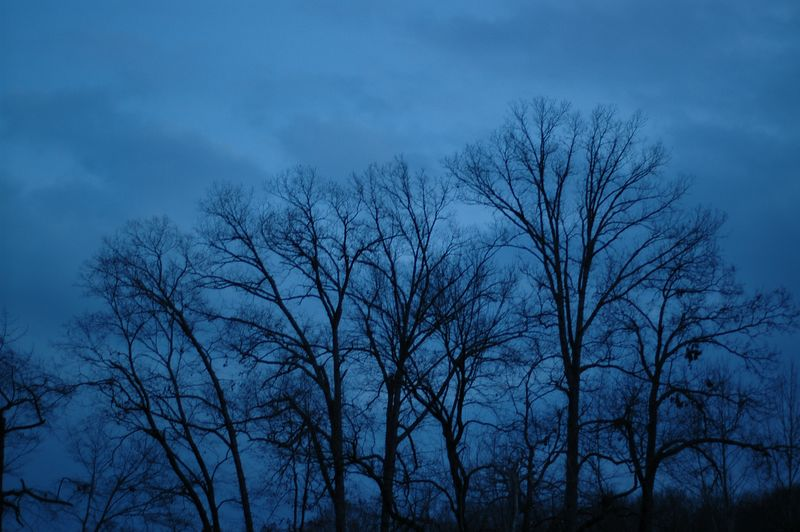 Trees and clouds.