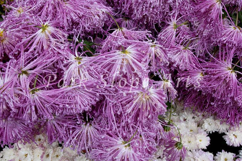FlowersR-6559.jpg