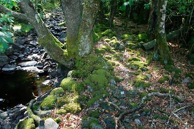 Lake District - Elements 2