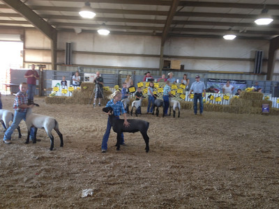 Madison's New River Valley Fair Show