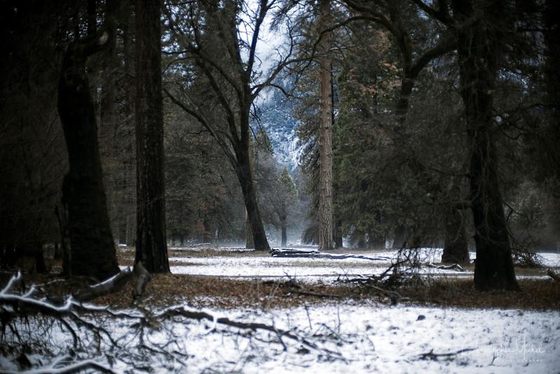 20141213_Yosemite_2912.jpg