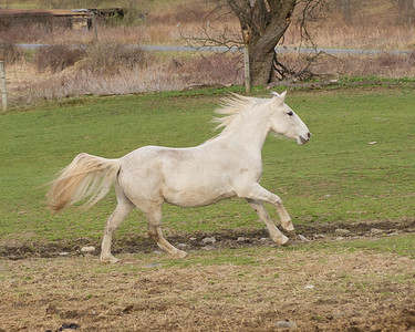 Young Mares - 20120330