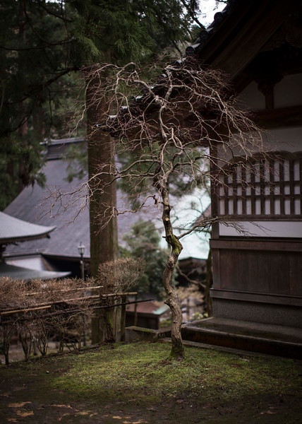 Eiheiji Temple 10041316 .jpg