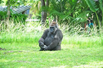Miami Zoo June 2012
