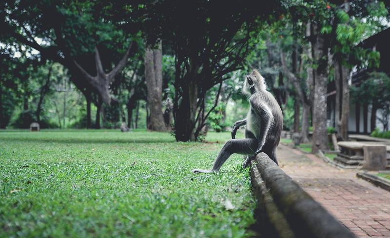 SriLanka_03.jpg