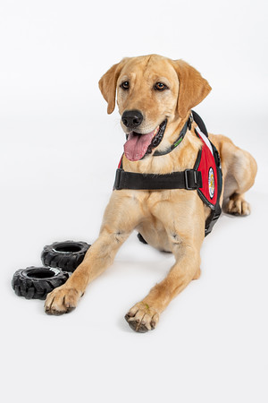Service Dogs For America 2020