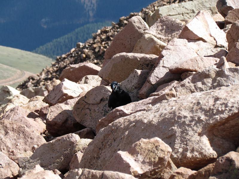 Pikes Peak 2011 (239).JPG
