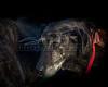 RescuedogsCanon_EOS_5D_Mark_III-2749